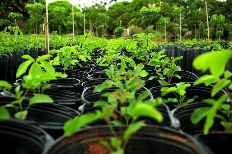 Distrito Federal ganhará 111,2 mil árvores a partir de novembro