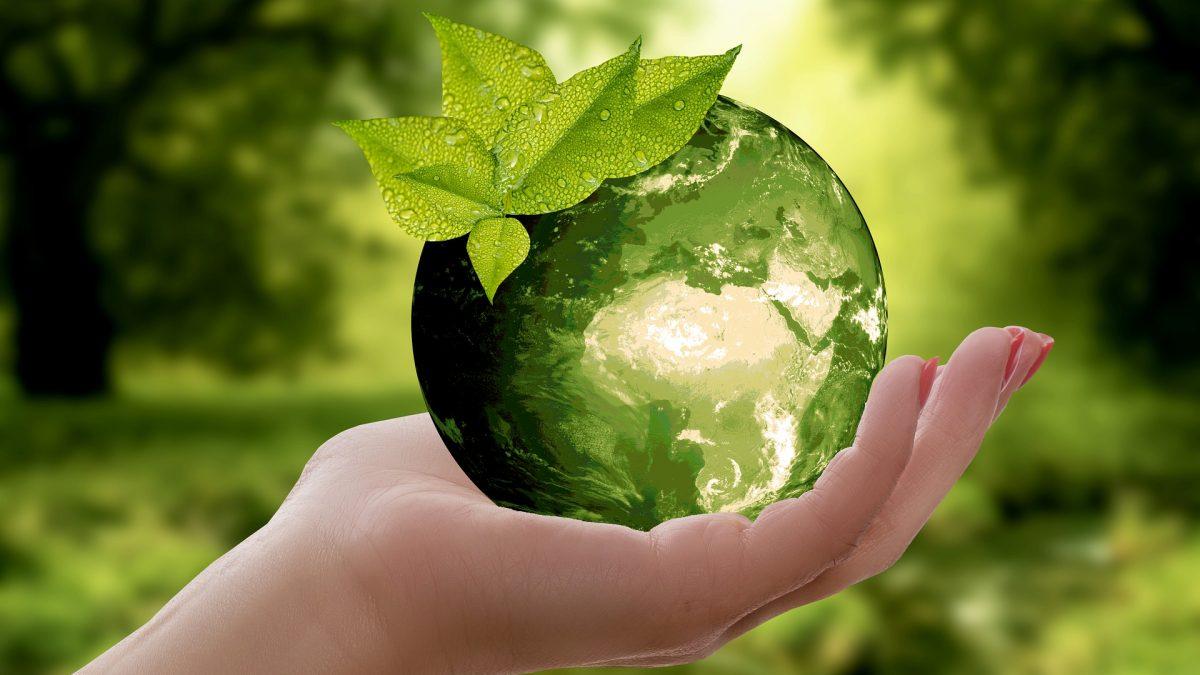 Por Que Se Tornar Uma Empresa Sustentável?